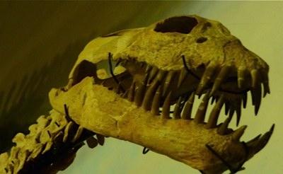 Dinosaur bones Montana