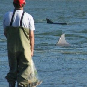Dolphin Fishermen Photo by Fbio Daura Jorge