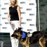 Hero Dog Shepherd with owner - SPCA 2012