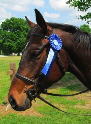 Horse with blue ribbon -Photo by Hidden K Stables