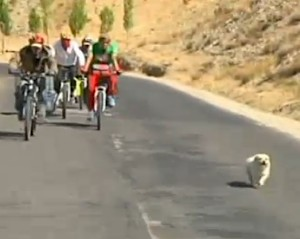 dog joins cycle race -BBC video snapshot