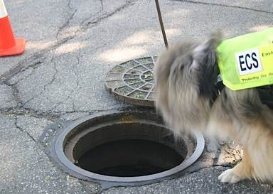 dog sniffing manhole - Riverkeepers photo