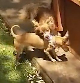dogs are best friends, helping each other