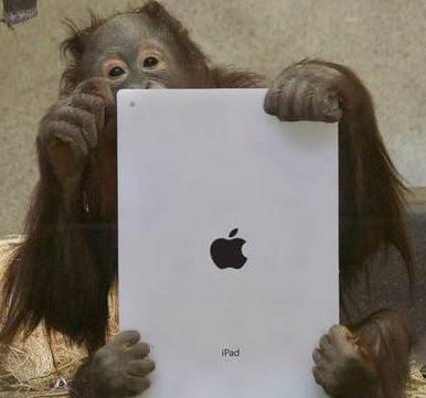 orangutan with iPad Photo by Kotaku
