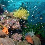Coral Sea conservation-group-photo-FB