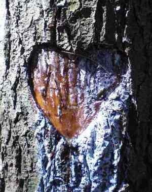 tree carving of heart -Photo by Ohioandy via Morguefile