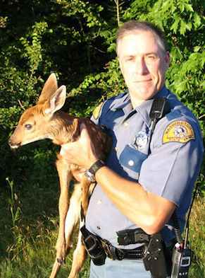 Cop with baby deer Bellingham, WA