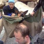 Dog rescue Colorado AHN org photo