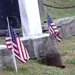 Woodchuck robs flags cemetary