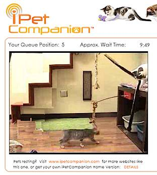 cat virtual playroom - BestFriends Animal Shelter