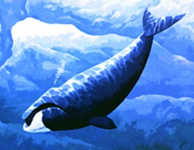 whale illustration - NOAA