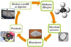 Bio-polymer process cradle2cradle-MangoMaterials
