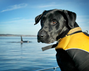 Dog on ocean with whale -Conservation Canines photo