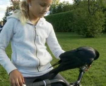 crow family pet-bike