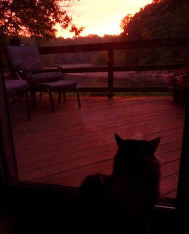 Sunrise cat -photo by McKinley Corbley