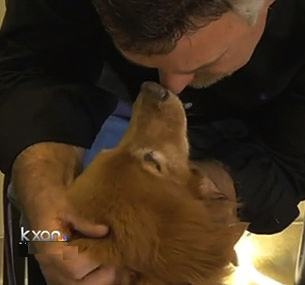 golden retriever survives-KXAN snapshot