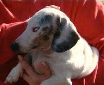 blind dog saves family in fire