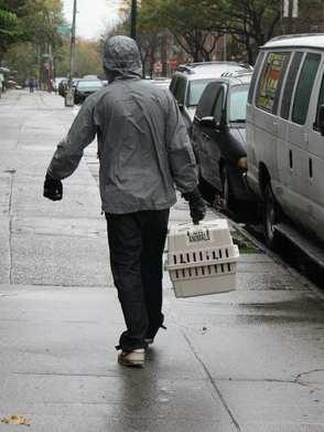 carrier man in rain