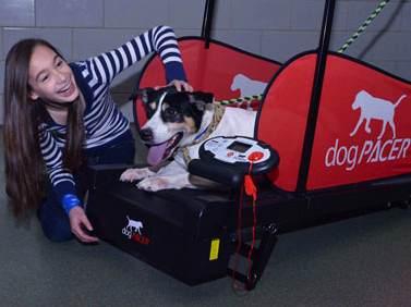 Dog Treadmill - Doug Foster Photo