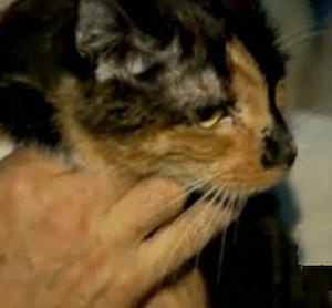 cat walks 190-miles home