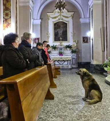 dog attends mass - unknown source