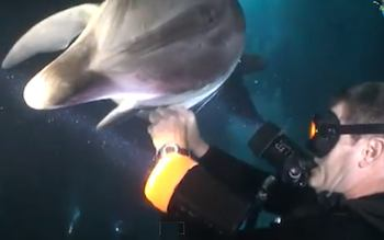 dolphin gets help with fishing tangle