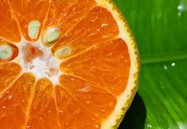 orange grapefruit - photo by Sun Star