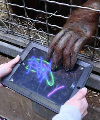 Apps for Apes program-SmithsonianPhoto