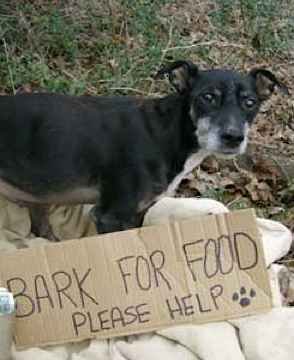 Dog Barks for food PetSoupKitchen