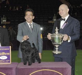 Westminster dog show winner 2013