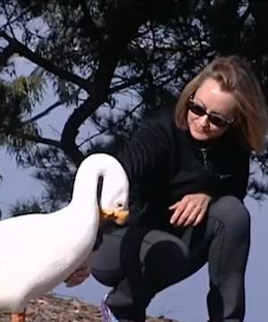 goose friendship rekindled - CBS video shot