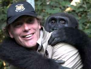 reunion of gorilla with its keeper