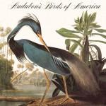 Audubon_Birds_of_America-bookcover-heron