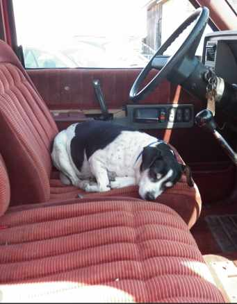 dog on deceased drivers seat-IMGUR