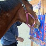 horse paints - NBC video