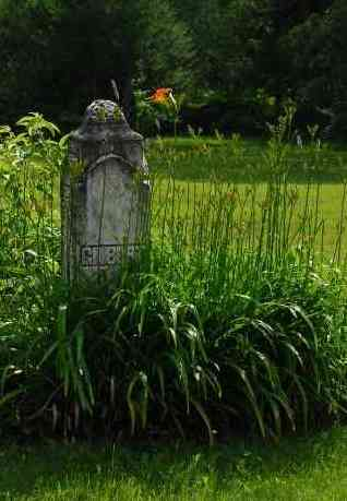 Gravestone old-overgrown-gracey-Morguefile