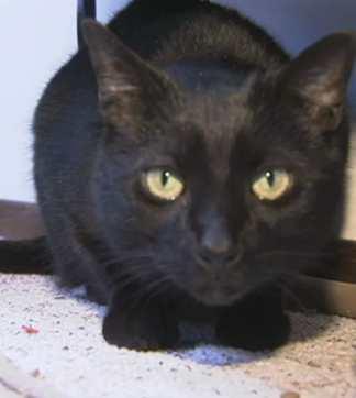 cat returns 6mos after Sandy