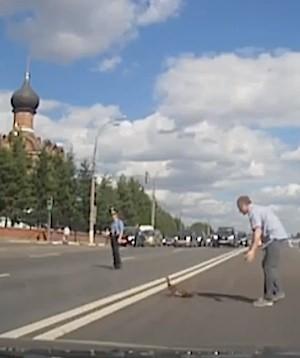duck crossing Russian dashcam