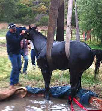 horse well rescue charity photo