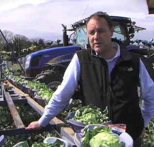 vegetable grower-UK-grocery