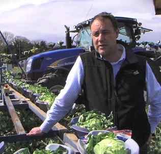 vegetable grower-UK-grocery