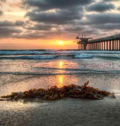 seaweed on Cal beach at sunrise pier
