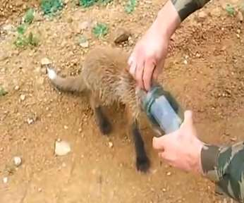 animal with jar rescue-YouTube