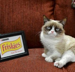 Grumpy cat with Friskies logo