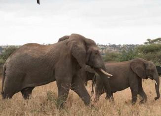 elephants African Clinton Global Initiative photo