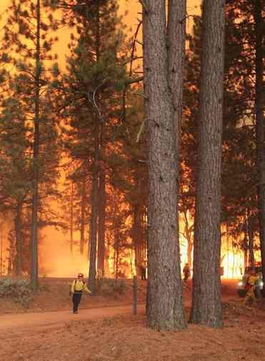 fire Forest Service worker-CAL FIRE