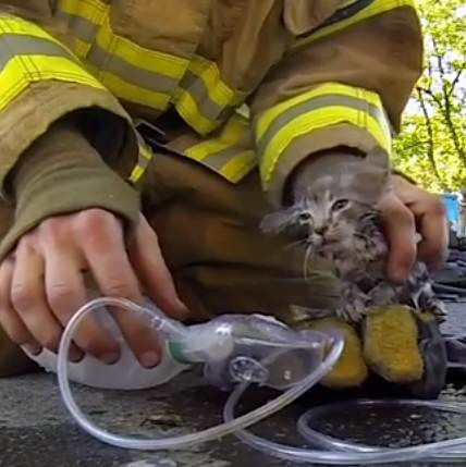 Firefighter rescues kitten