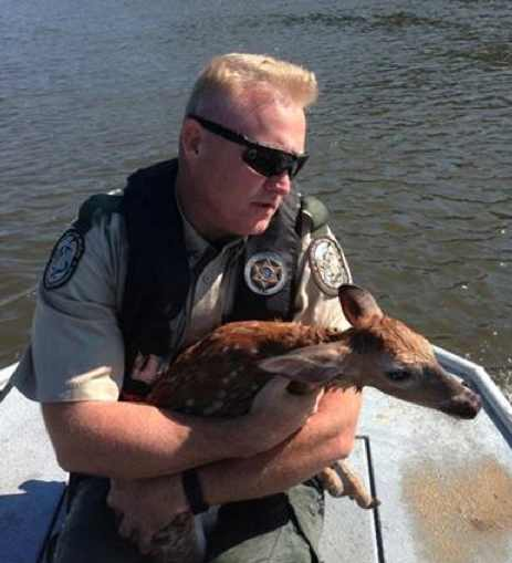 fawn resuced by FWS rookie