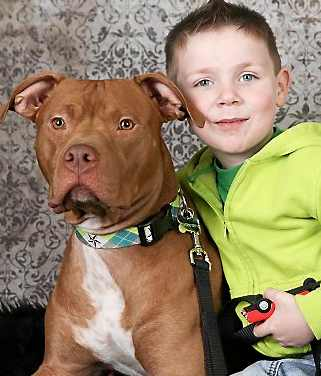 pit bull tator tot and boy - family photo