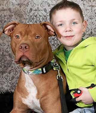 pit bull tator tot and boy - family photo